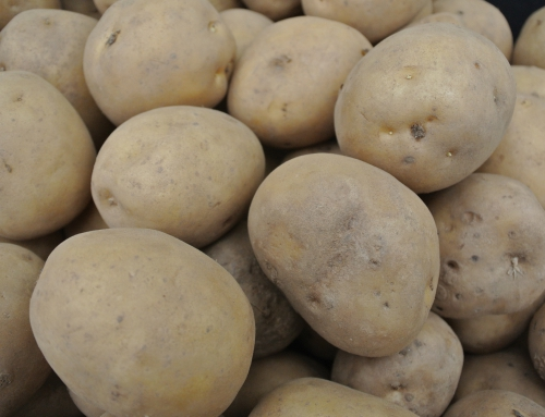 Seed Potatoes NOW AVAILABLE