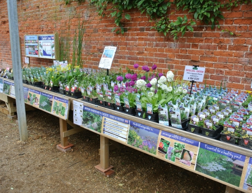 Pond Plants – NEW to The Walled Garden